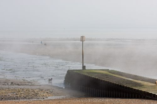 miglotas, rūkas, papludimys, jūra, vandenynas, smėlis, žmonės, šunys, jūros dugnas, vaizdas, scena, baisus, kranto, nuotrauka, vaizdas, miglotas paplūdimio scena