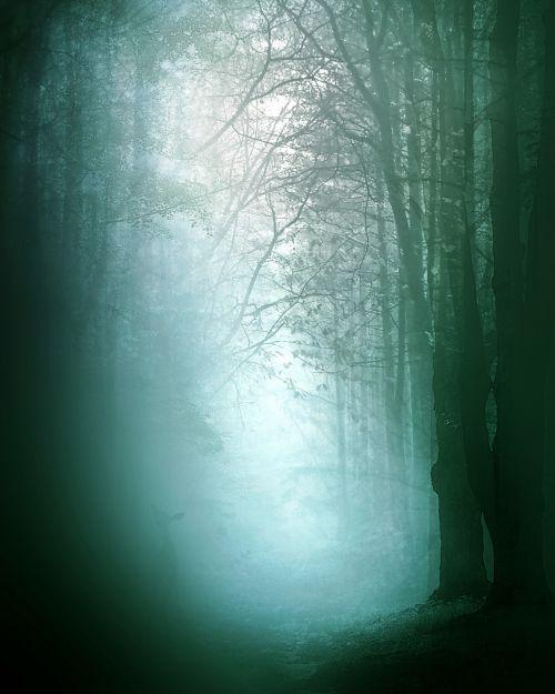 rytas, migla, miškas, gamta, tamsi, rūkas, medžiai, miglotas rytas 1