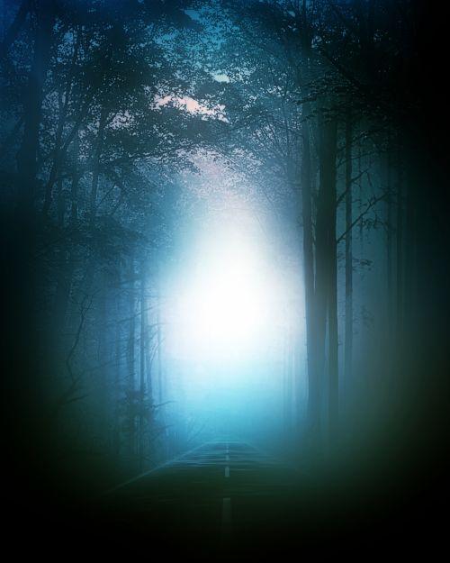 rytas, migla, miškas, gamta, tamsi, rūkas, medžiai, miglotas rytas 2