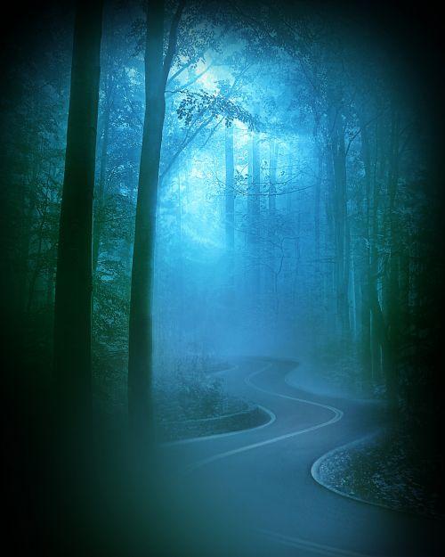 rytas, migla, miškas, gamta, tamsi, rūkas, medžiai, miglotas rytas 3