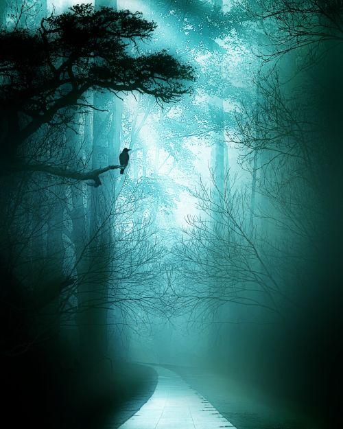 rytas, migla, miškas, gamta, tamsi, rūkas, medžiai, miglotas rytas 4