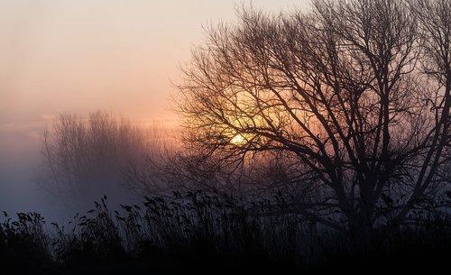 misty morning  spring  silhouette