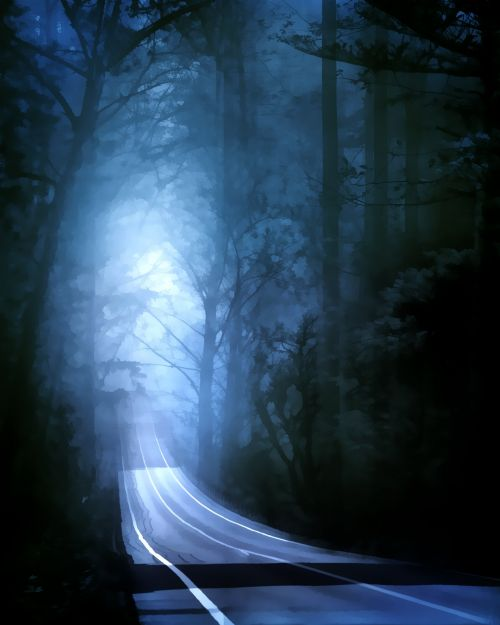 rytas, migla, miškas, gamta, tamsi, rūkas, medžiai, miglotas rytas 5