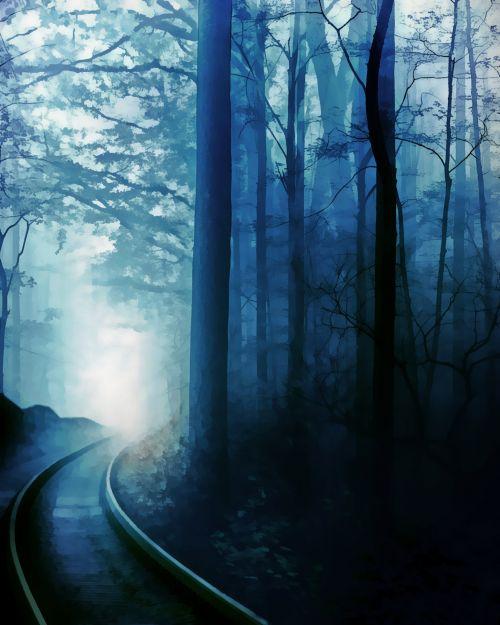 rytas, migla, miškas, gamta, tamsi, rūkas, medžiai, miglotas rytas 6