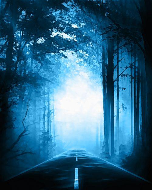 rytas, migla, miškas, gamta, tamsi, rūkas, medžiai, miglotas rytas 8