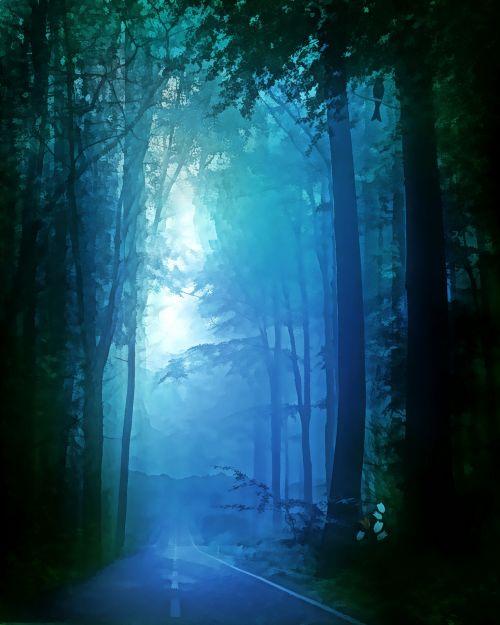 rytas, migla, miškas, gamta, tamsi, rūkas, medžiai, miglotas rytas 9