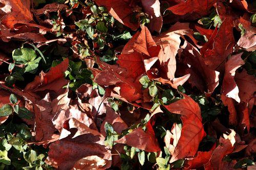Mixed Fallen Leaves