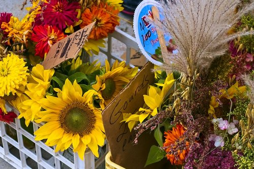 mixed flowers in madison  farmers market  sunflowers