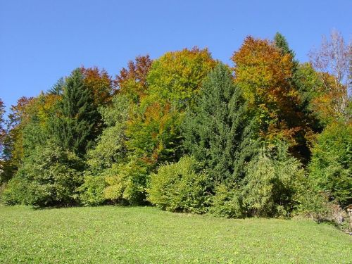 mixed forest autumn colorful