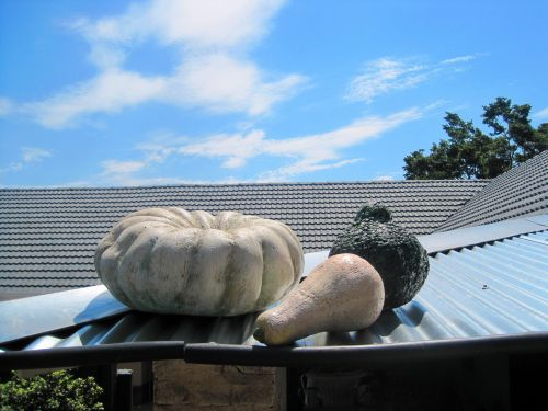 Mock Pumpkins On Roof