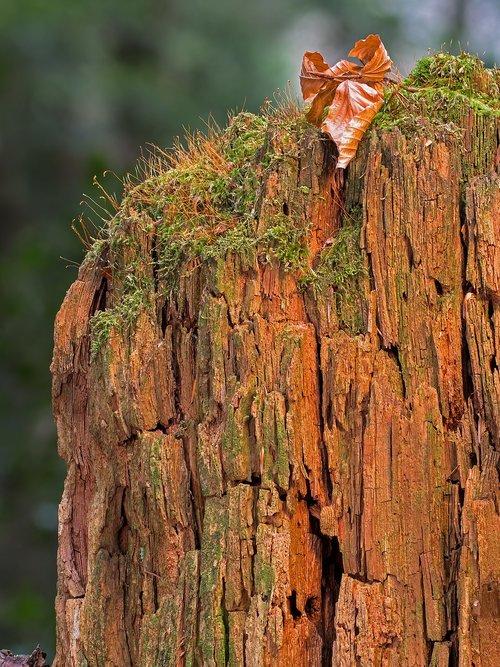 modern  dead wood  wood decomposition