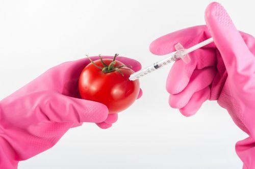 modified tomato genetically
