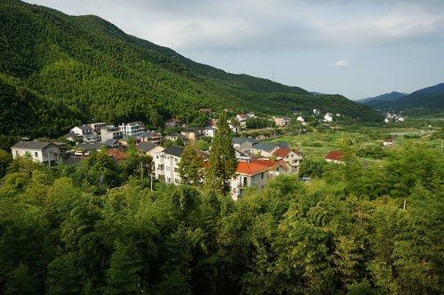 moganshan  summer  mountainside