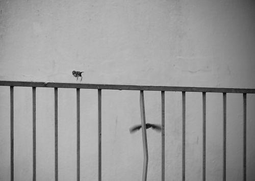 Sparrows On The Balcony