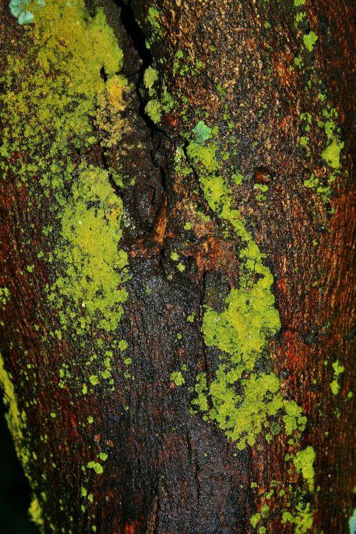 Moist Moss On Tree
