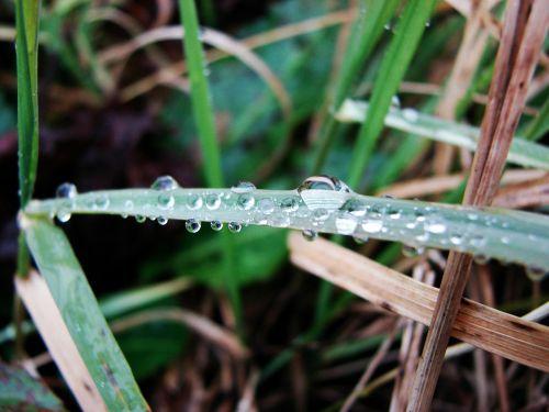moisture grass nature