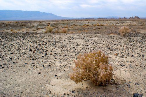 Mojave Desert Desolation