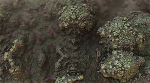 mold bacteria fungus