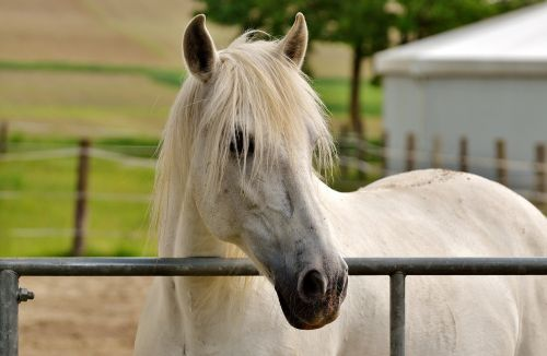 mold horse white