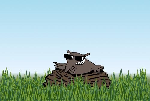 mole molehill animal