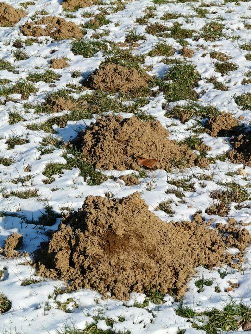 molehill mole earth