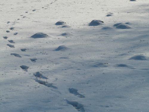 molehill footprint wintry