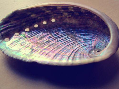 molluscum sea shell