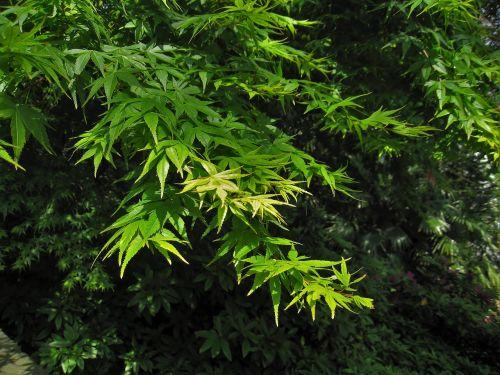 momiji green yokosuka-shi