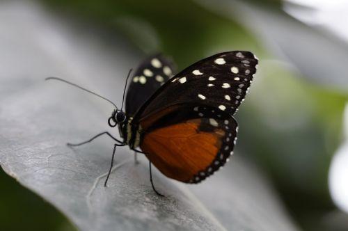 monarch monarch butterfly butterfly