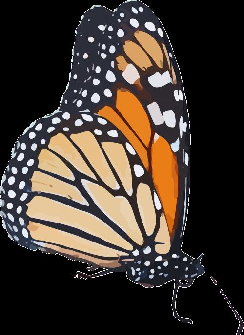 monarch butterfly danaus plexippus milkweed butterfly