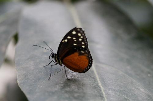 monarch butterfly butterfly tropical