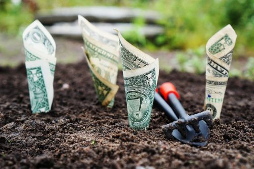 money grow interest