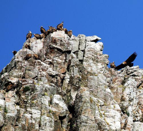 monfrague park spain vultures