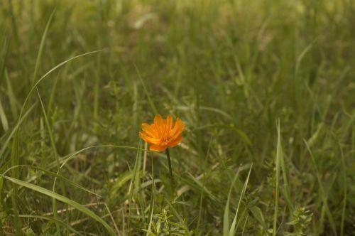 mongolia path flower