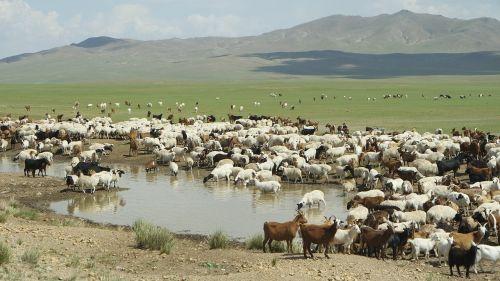 mongolia yangttae nomadic
