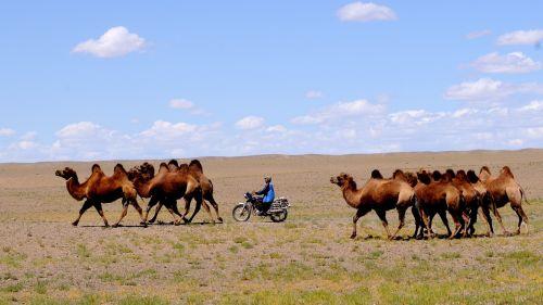 mongolia desert nomad