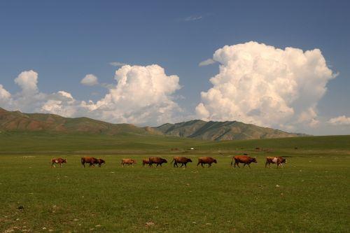 mongolia steppe wide