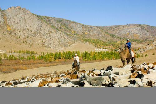 mongolia landscape mountains