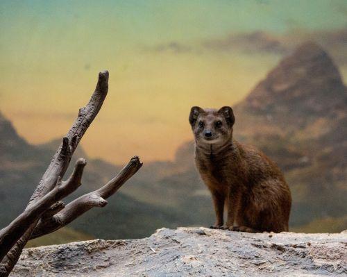 mongoose mountain scenery