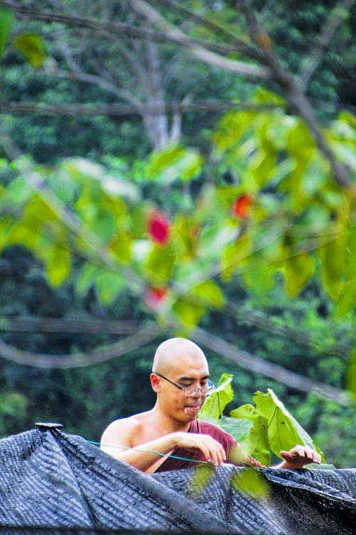 monk bhikkhu monk at work