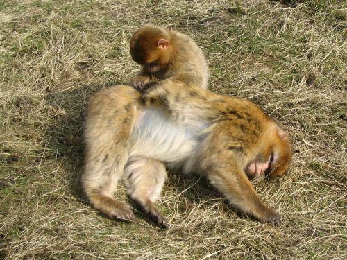 monkey animals care
