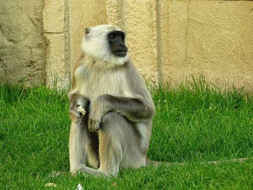 monkey zoo animal world