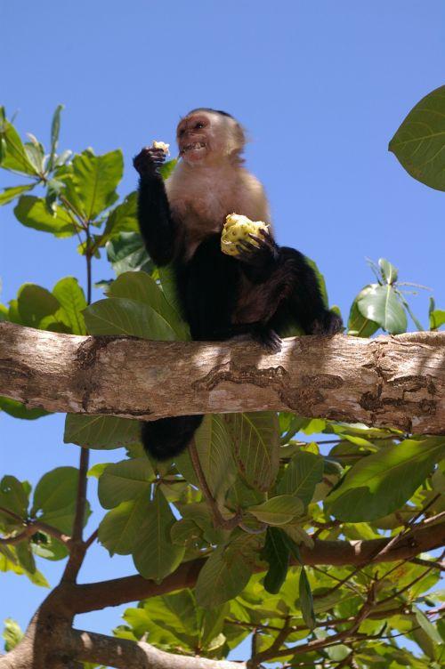 monkey animals eat