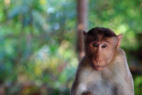 monkey stare nature