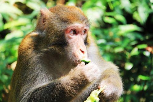monkey eat interesting
