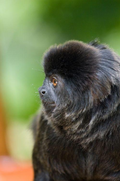 monkey zoo observing