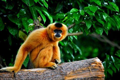 monkey primate asia