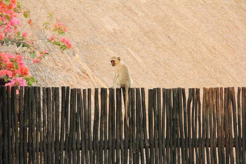 monkey cute scenic
