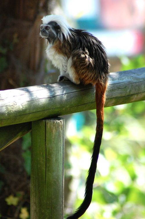 monkey zoo animals