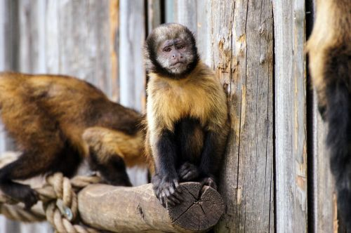 monkey zoo sad
